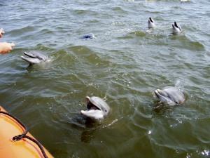 Katrinadolphins