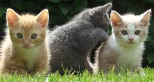 070606_cute_kittens_02