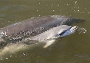 Dolphinbaby