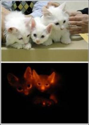 Flourescentcats