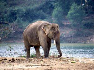 800pxworking_elephant_vietnam